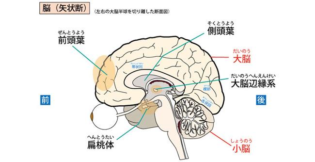 発達障害の脳の機能